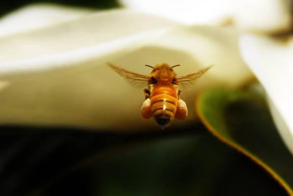大黄蜂高清壁纸的浅景深fof