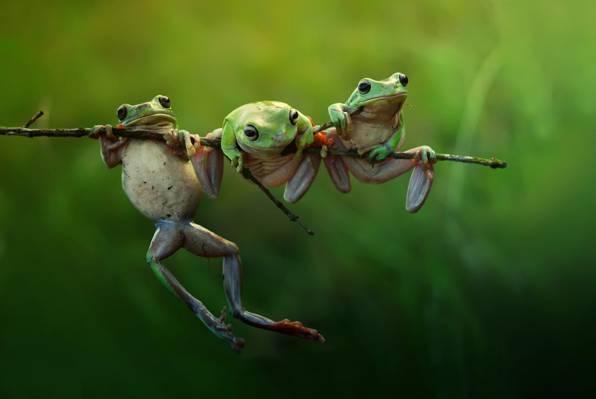 性质,分支,宏,青蛙