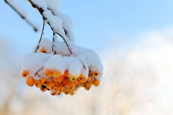 白天特写摄影高清壁纸橙色水果雪
