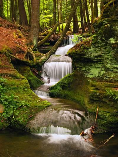 游戏中时光倒流的摄影由绿色的青苔和绿叶树高清壁纸包围的清澈的瀑布