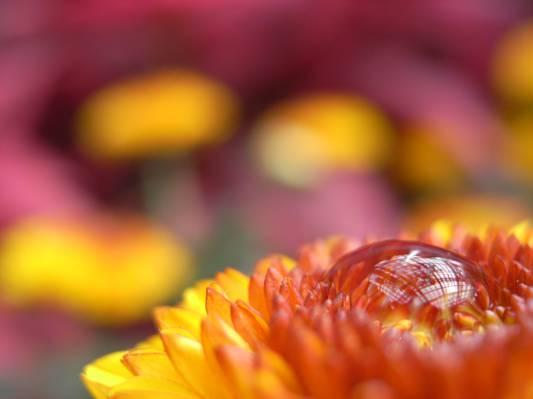 微距拍摄的黄色雏菊花高清壁纸