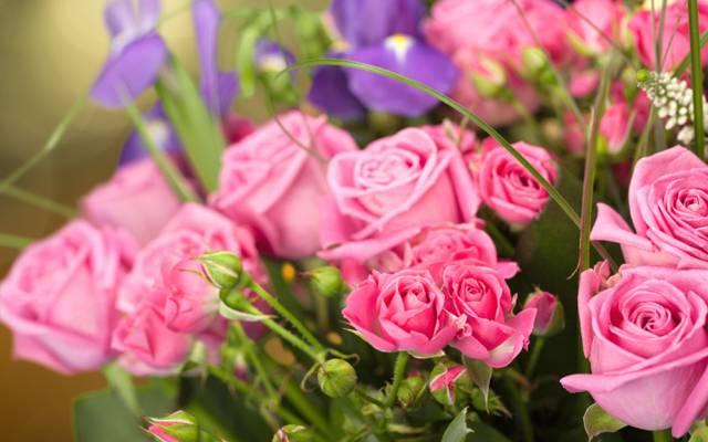 鸢尾花,背景,芽,玫瑰,花束