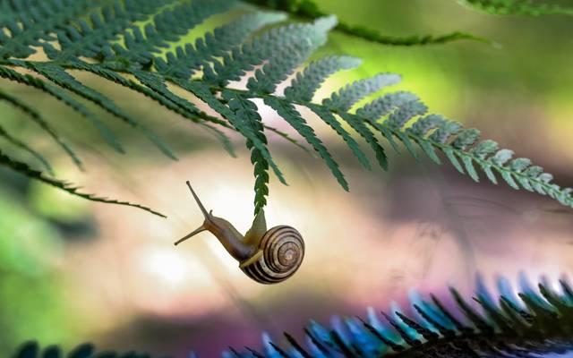 宏观,叶子,蜗牛