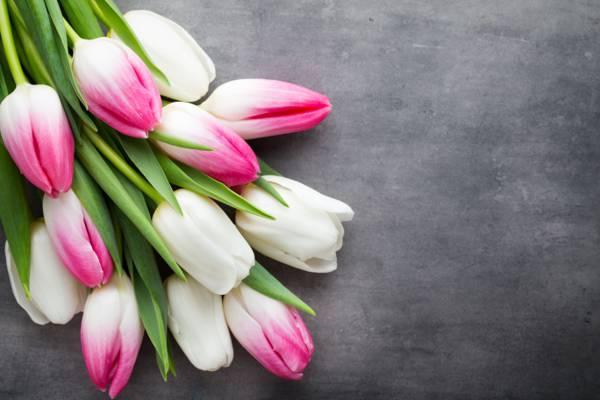 美丽,粉红色,新鲜,白,粉红色,白,郁金香,郁金香,花束,春天,鲜花,鲜花