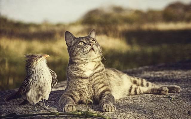 自然,鸟,猫