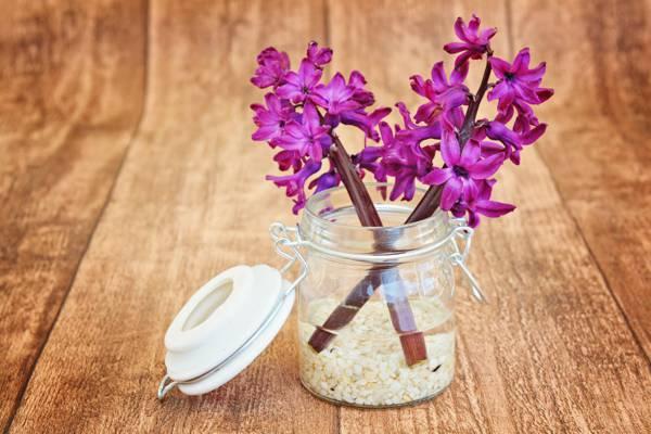 在透明的玻璃罐高清壁纸粉色的花