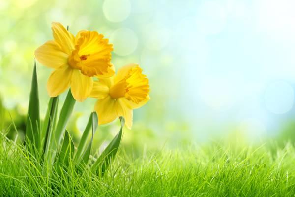 花,杂草,布什,水仙花