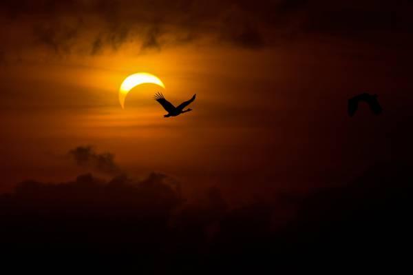 太阳,鸟,傍晚,光,天鹅,黑暗,鹅