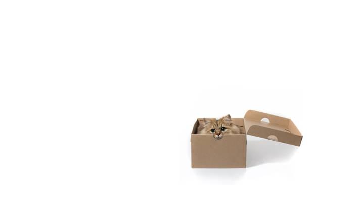 猫,极简主义,白色背景,雏菊,框,©Benjamin Torode