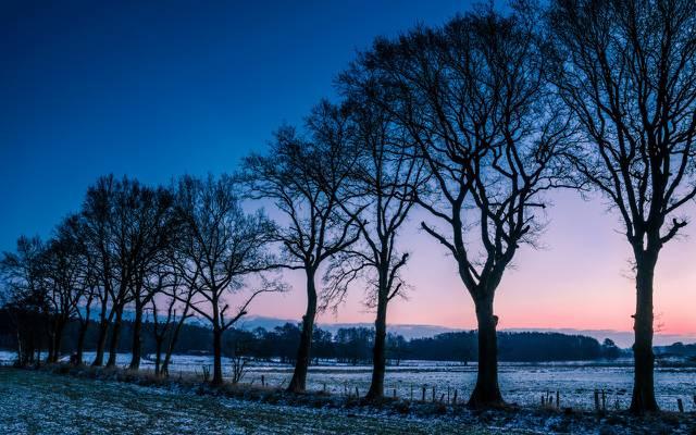 壁纸早晨,黎明,霜,冬季,树木,林间空地,田野,挪威,黎明