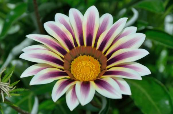 紫色和白色选择性焦点摄影pallled花HD墙纸