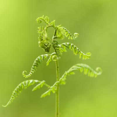绿叶植物高清壁纸