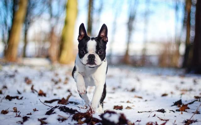 狗,雪,性质