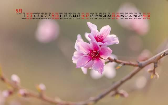 2020年5月小清新粉色花朵日歷桌面壁紙