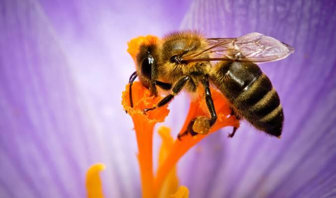 自然,花卉,蜜蜂,昆虫