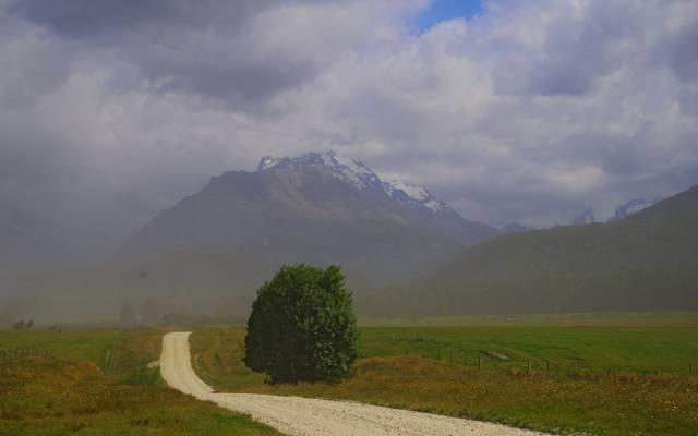 新西兰,树,山,田野,雾,路