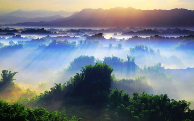 美,早上,一天,光线,自然,一天,树,树,树,太阳,风景