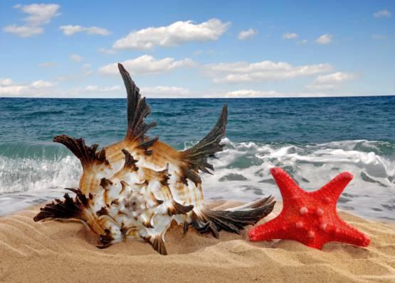 贝壳,沙滩,海,沙,海,沙,贝壳,海星,明星