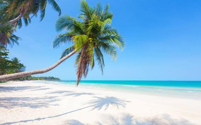 太阳,热带,夏天,沙滩,沙滩,大海,沙滩,大海,沙滩,棕榈树,岸边,岛屿,天堂,棕榈...