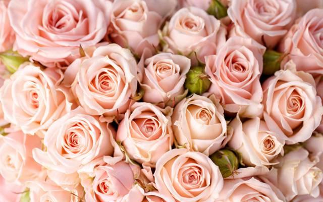 鲜花,鲜花,花束,玫瑰,花束,玫瑰