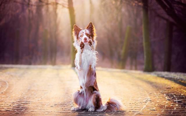 狗,看,每个