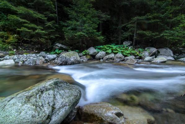 在白天高清壁纸的森林附近的河