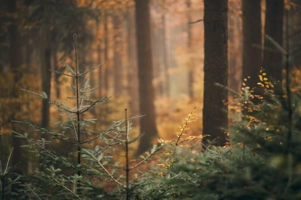 自然,森林,秋天,树