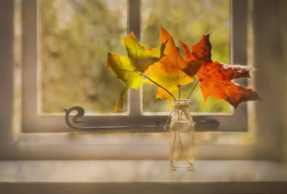 叶子,窗口,秋天