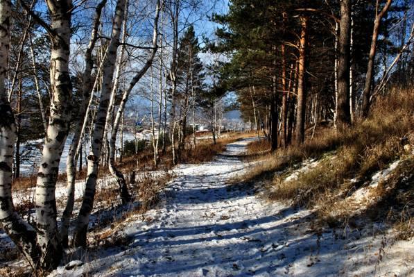 壁纸Ust' - 谷,路径,雪,冬天,轨道,森林