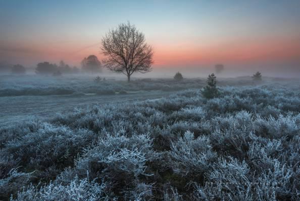 早上,自然,霜,树木,灌木丛,3月,荷兰,霜,春天
