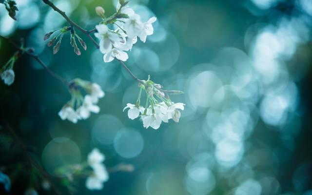分支,春天,性质
