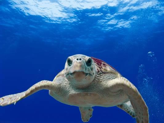 海龟高清壁纸的特写照片