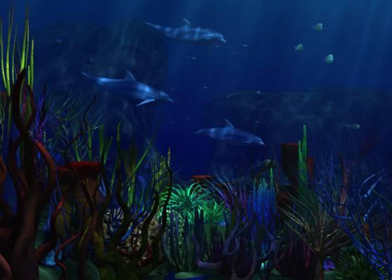 海,藻类,海豚,海底世界,珊瑚。
