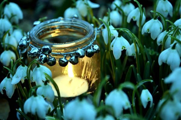 蜡烛,火,罐子,春天,雪花莲