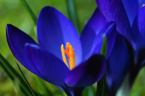 蓝色的花瓣花高清壁纸