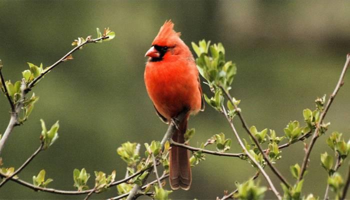 主要鸟栖息在树高清壁纸上的景深摄影的深度