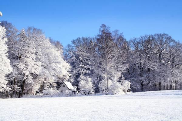 被树包围的白色房子有雪HD墙纸的