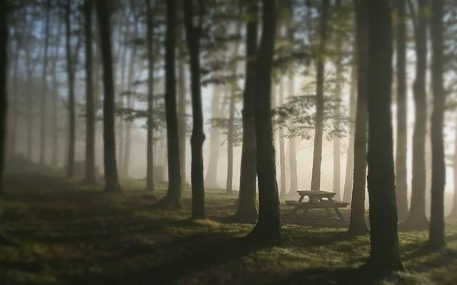 雾,长凳,表,树木,森林
