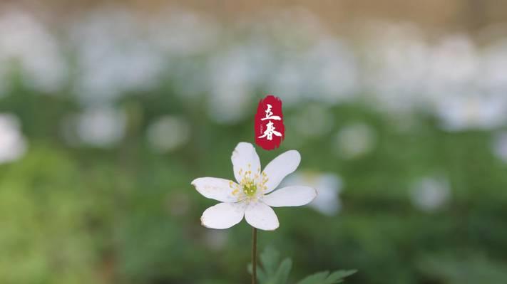 立春,阳光下的唯美春花