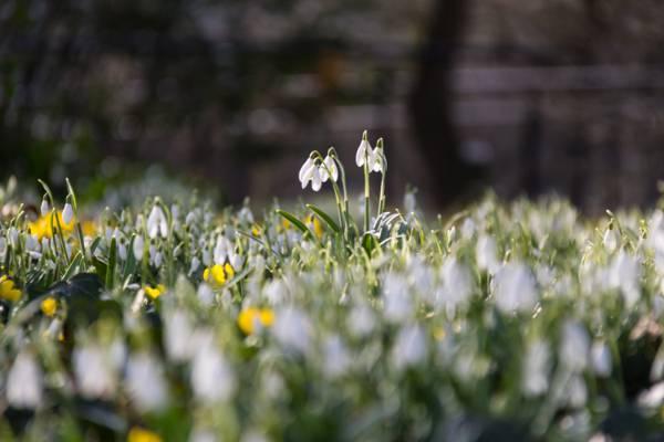 关闭白色petaled花照片在天关系HD墙纸期间