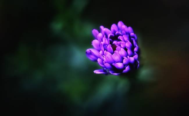 紫色花高清壁纸的浅焦点摄影