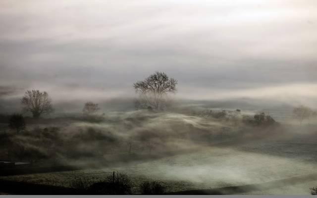 雾,夜,场,景观