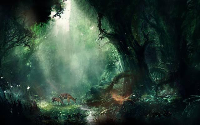 小鹿斑,小鹿,森林,森林,艺术