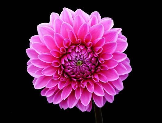 粉红色的多花朵高清壁纸