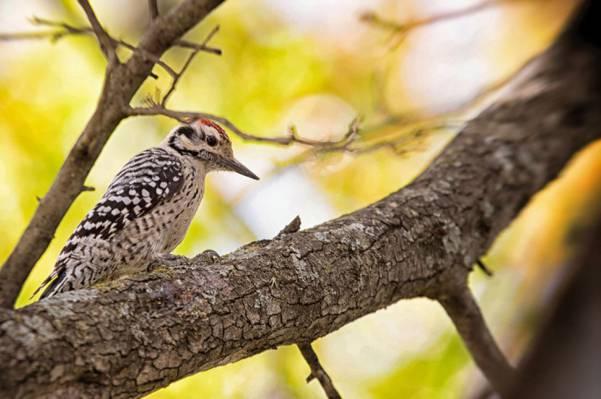 站在树上的啄木鸟