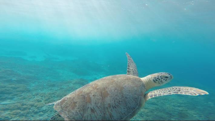 海,水,海洋,动物高清壁纸