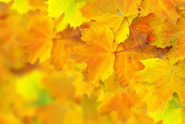 散景,秋天,叶子