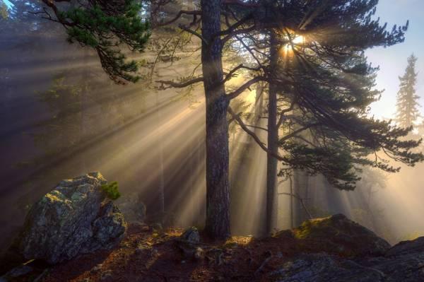 早上,光线,光线,太阳,自然,树木,森林,石头