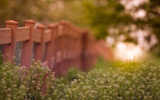 栅栏,草地,灯光