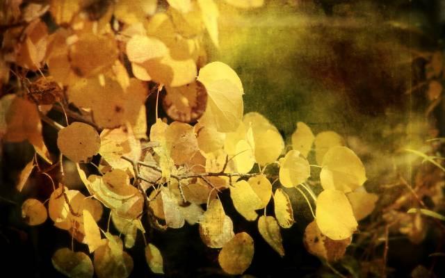 样式,秋天,背景,叶子